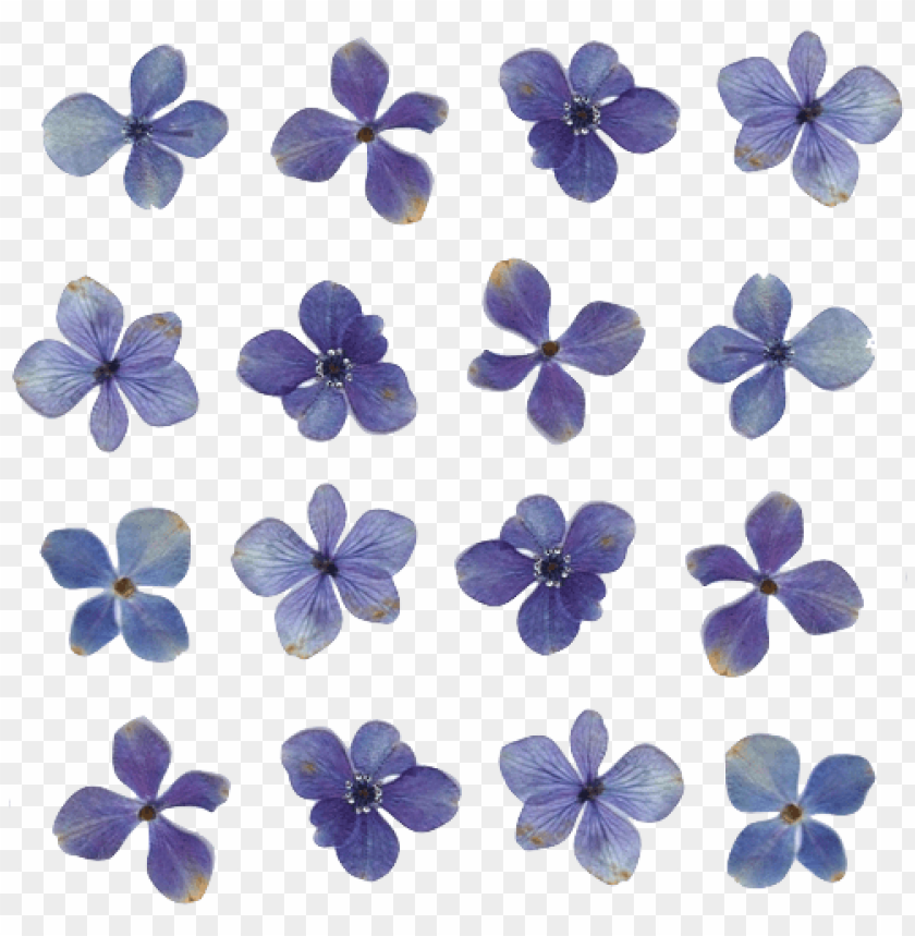 free PNG flowers transparent tumblr PNG image with transparent background PNG images transparent