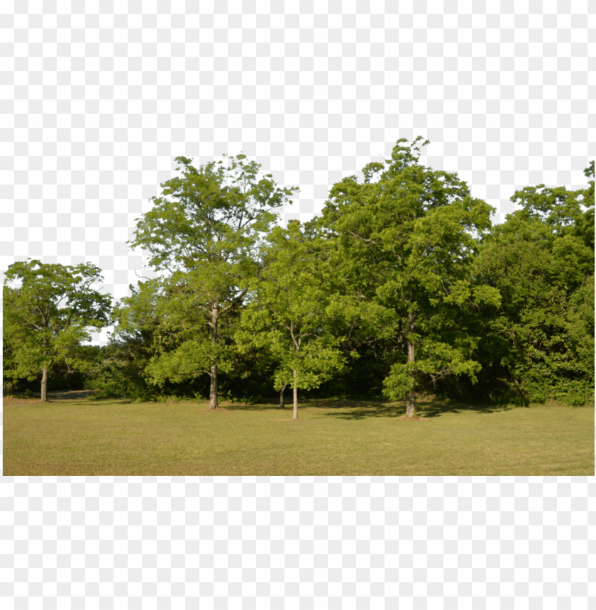 forest png image - tree for background PNG image with