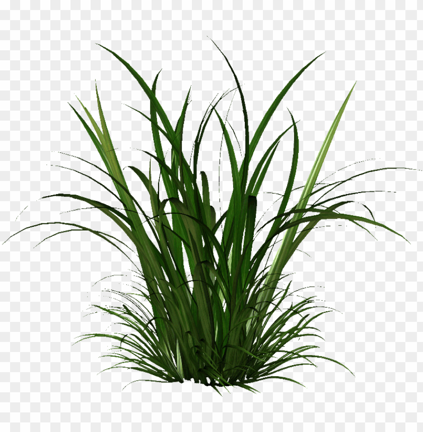 free PNG free icons  - plants painting png - Free PNG Images PNG images transparent