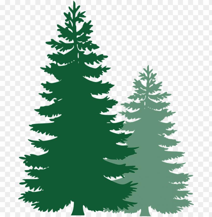 free image on pixabay pine trees spruce trees pine - pine