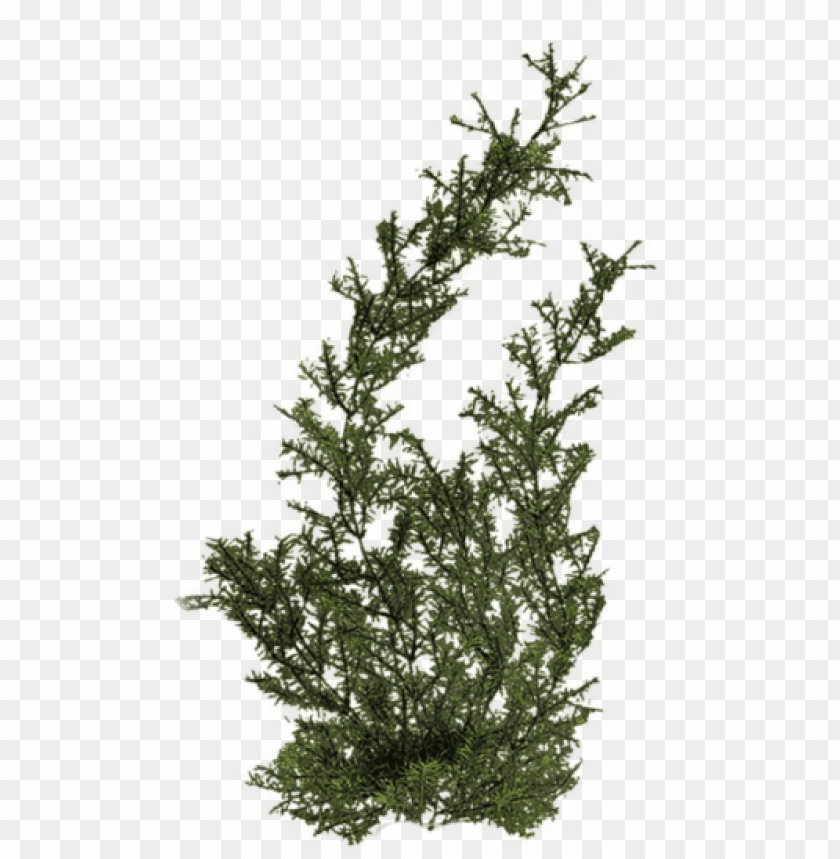 free PNG free png plants png images transparent - river plants PNG image with transparent background PNG images transparent