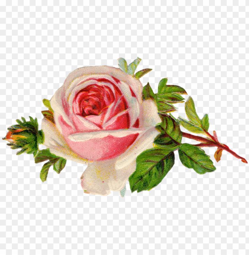 free PNG free vintage rose clip art free pretty things for you - vintage rose clip art PNG image with transparent background PNG images transparent