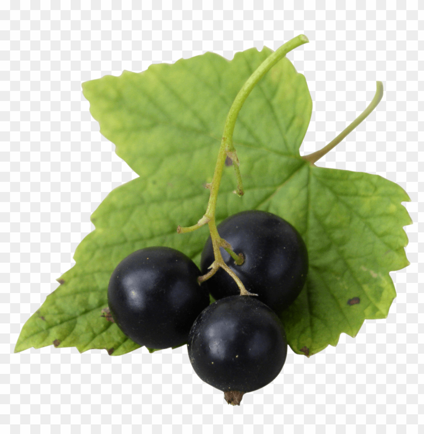 free PNG Fresh Black Currants png - Free PNG Images PNG images transparent