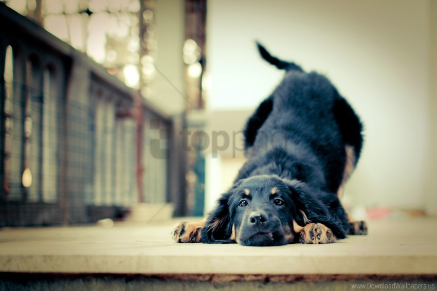 free PNG friendship, loyalty, puppy wallpaper background best stock photos PNG images transparent