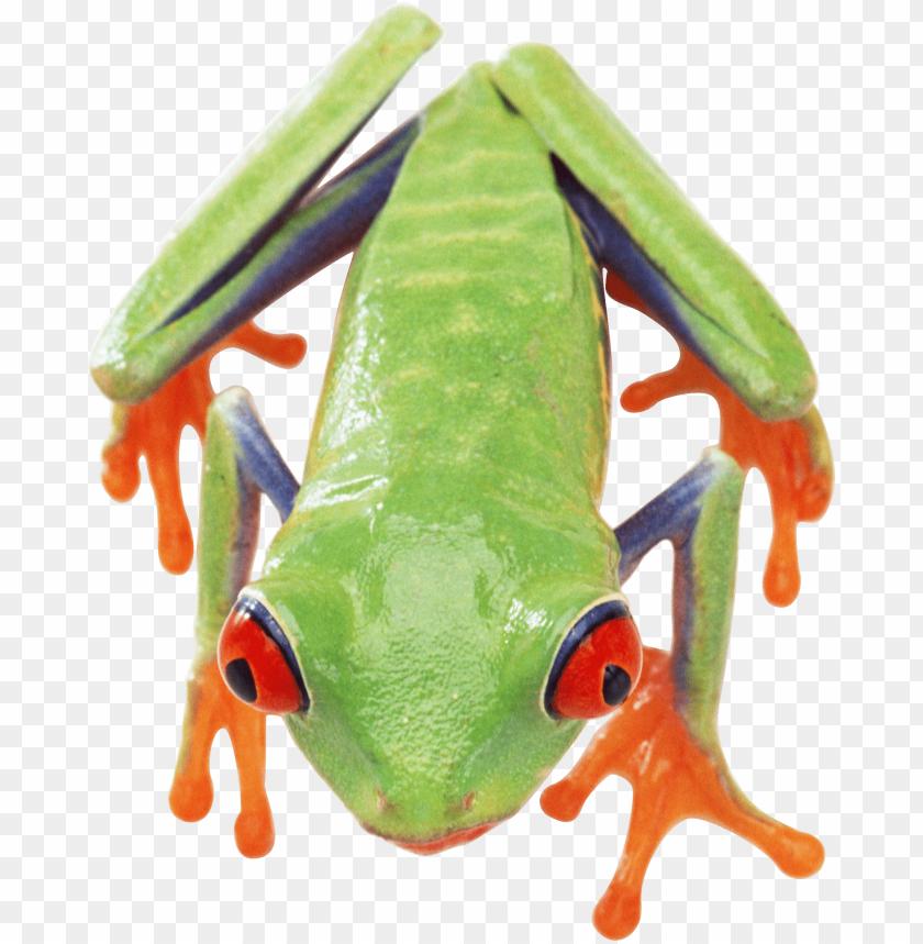 free PNG Download frog png images background PNG images transparent