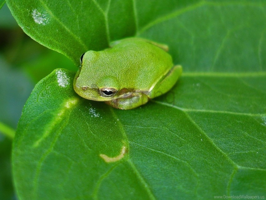 free PNG frog, leaf, reptile, surface wallpaper background best stock photos PNG images transparent