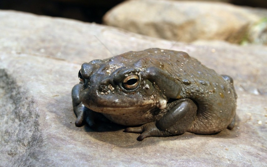 free PNG frog, stone, toad wallpaper background best stock photos PNG images transparent