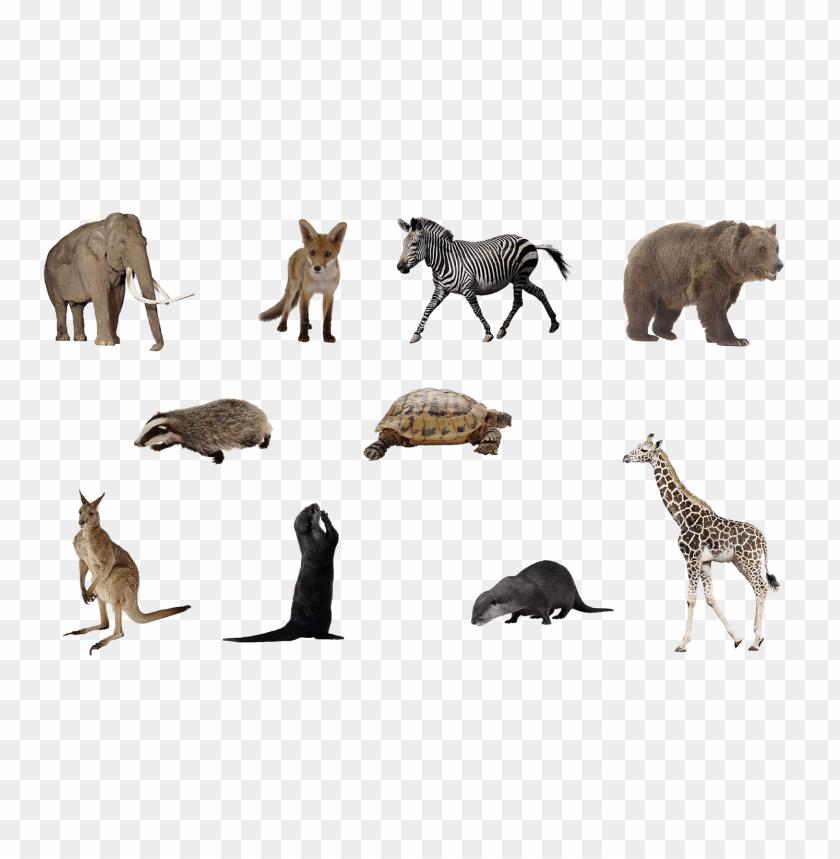 50 Gambar Binatang Format Png HD