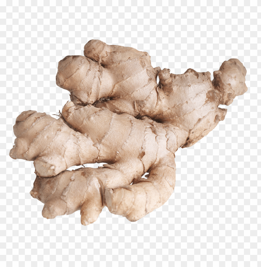 free PNG Download ginger root png images background PNG images transparent
