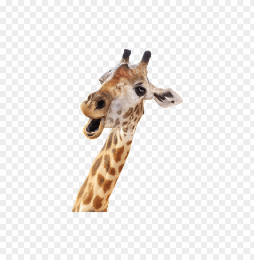 free png giraffe PNG images transparent