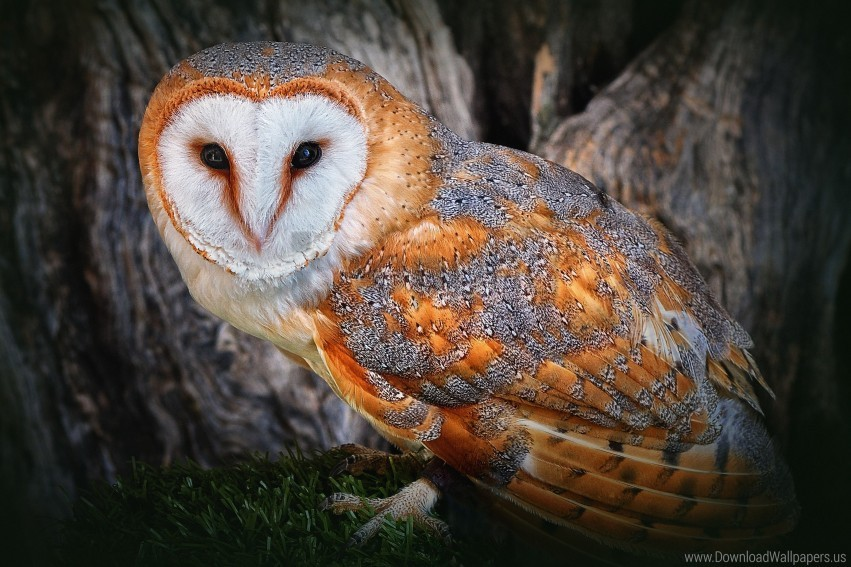 free PNG gold, owl, polar wallpaper background best stock photos PNG images transparent