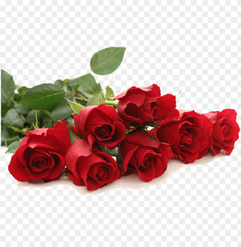 Good Morning Red Rose Png Image With Transparent Background Toppng