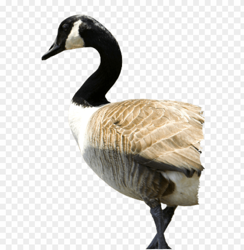 goose png free png images toppng