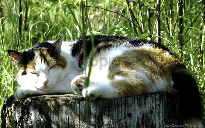 free PNG grass, heat, sleeping cat wallpaper background best stock photos PNG images transparent