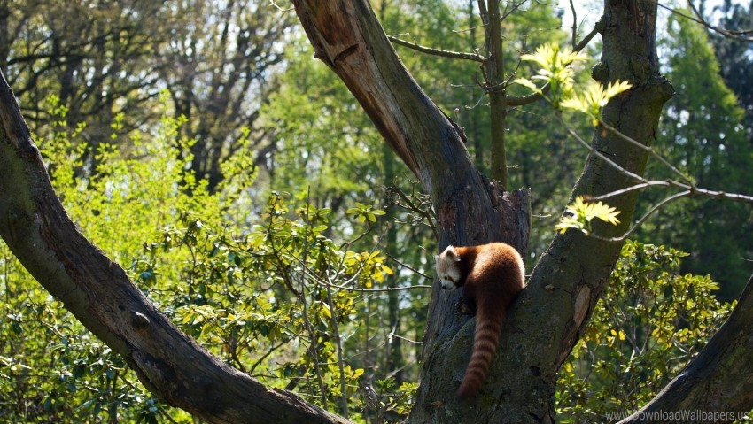 free PNG grass, leaves, red panda, tree wallpaper background best stock photos PNG images transparent