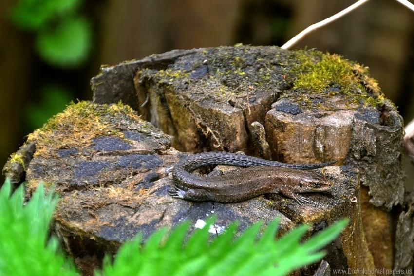 free PNG grass, lizard, moss, tree stump wallpaper background best stock photos PNG images transparent