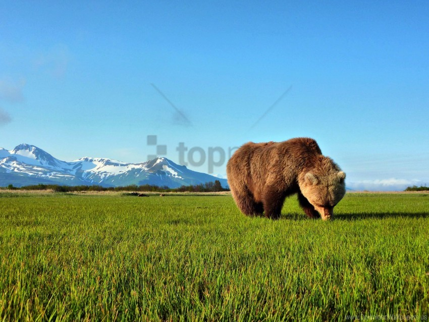 free PNG grass, mountain, snow, teddy bear, the horizon, the sky wallpaper background best stock photos PNG images transparent