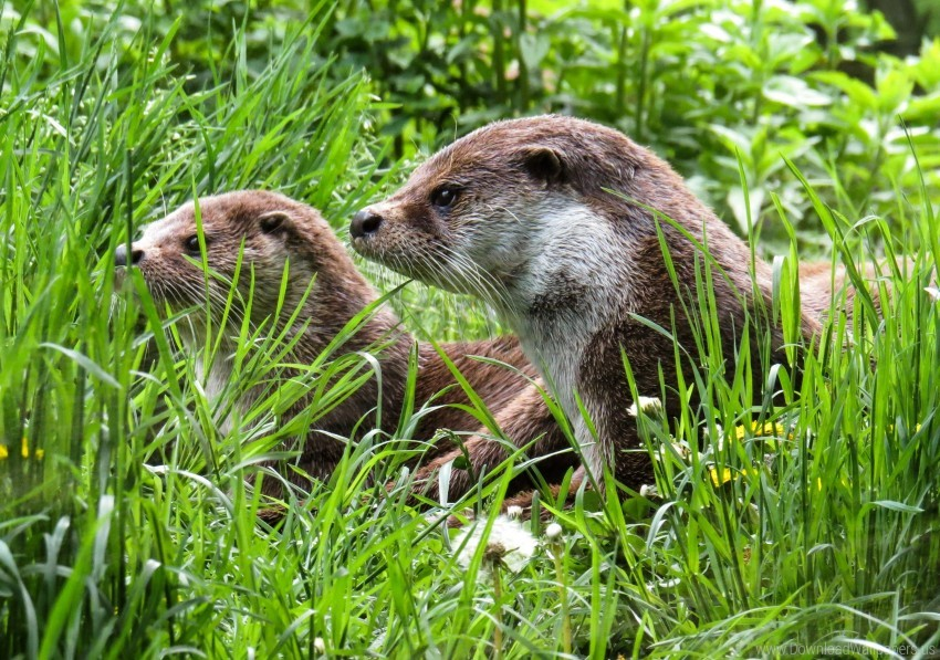 free PNG grass, nature, otters wallpaper background best stock photos PNG images transparent