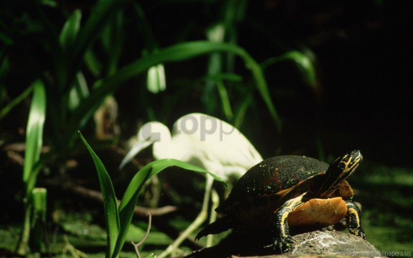 free PNG grass, shell, stone, turtle wallpaper background best stock photos PNG images transparent