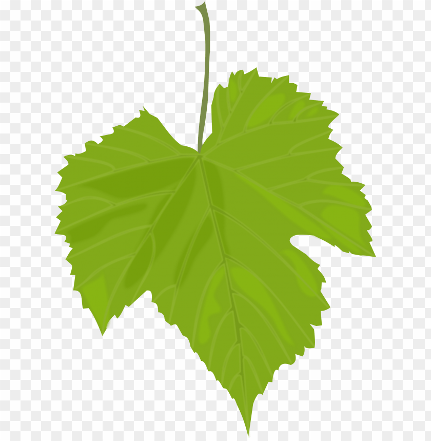 free PNG Download green leaves png images background PNG images transparent