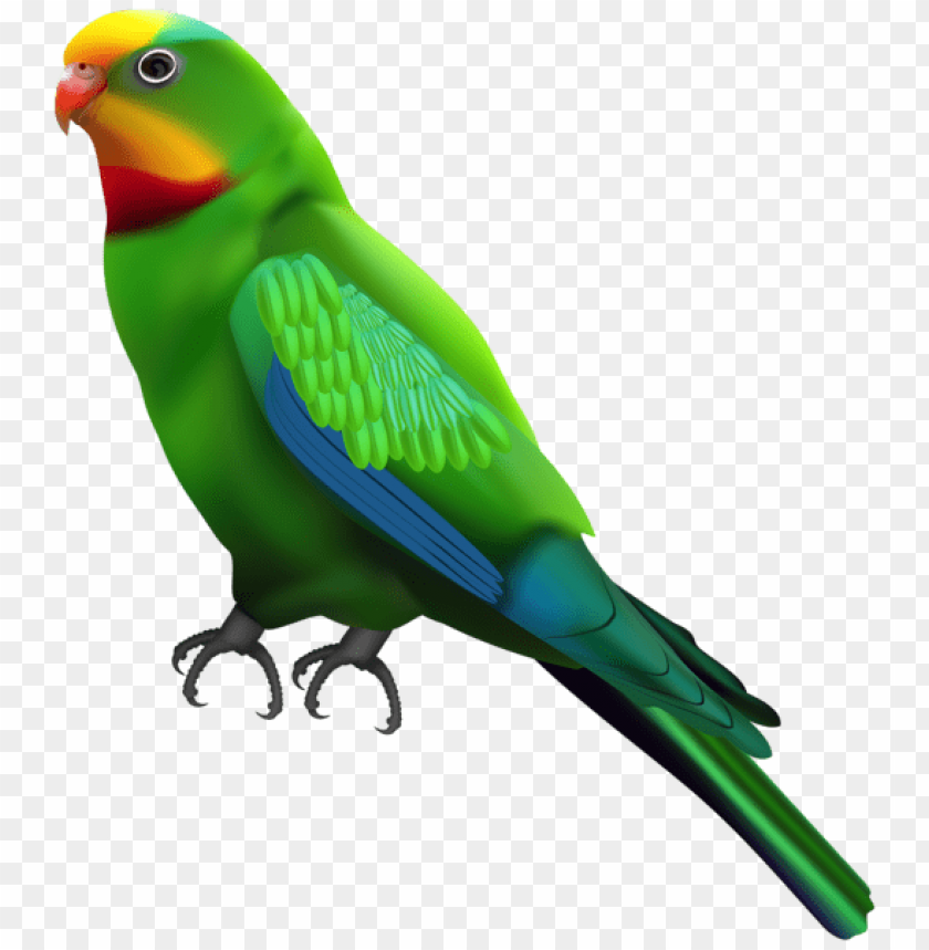 Download green parrot transparent png images background | TOPpng