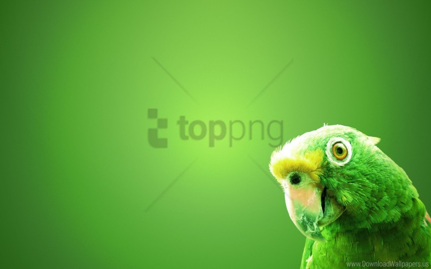 free PNG green parrot wallpaper background best stock photos PNG images transparent