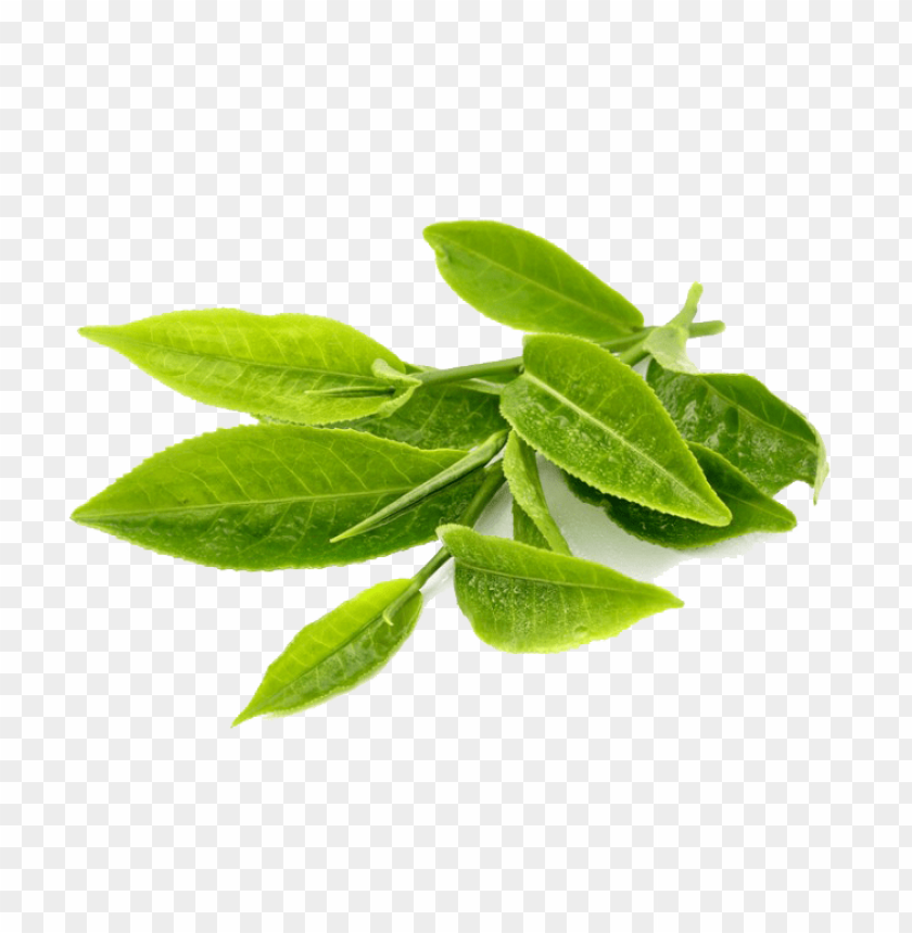 free PNG green tea PNG images transparent