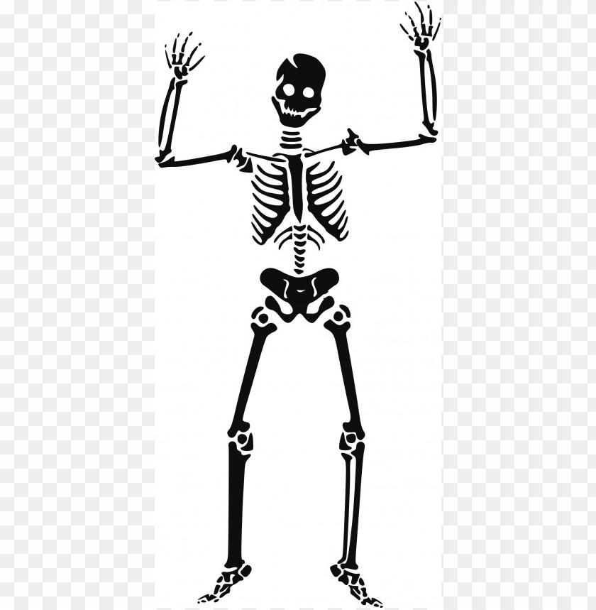 free png halloween skeleton  free  images image PNG images transparent