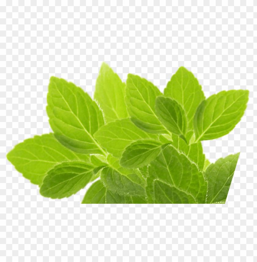 free PNG Download herb png images background PNG images transparent