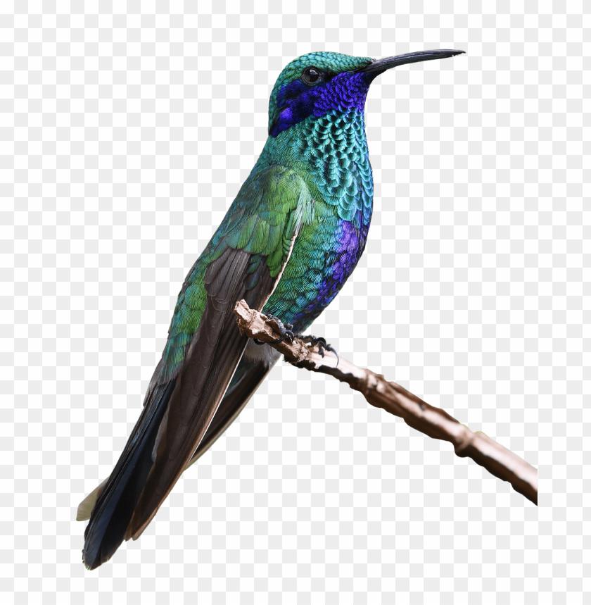free png hummingbird PNG images transparent