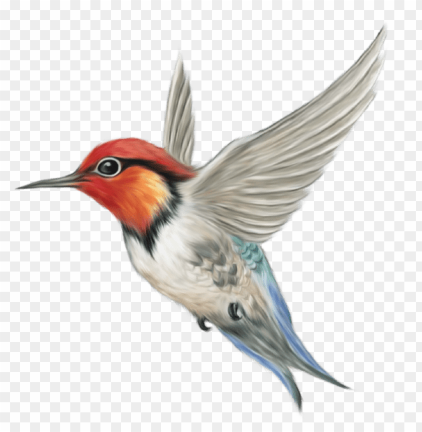 free PNG hummingbird art PNG images transparent