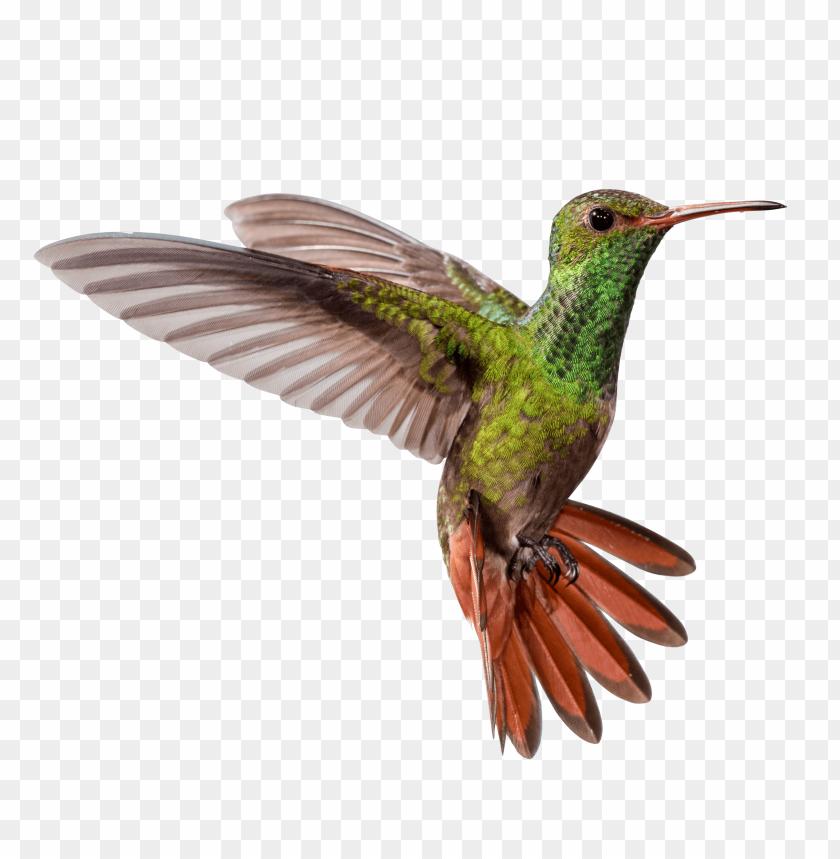 free PNG hummingbird png pic PNG images transparent