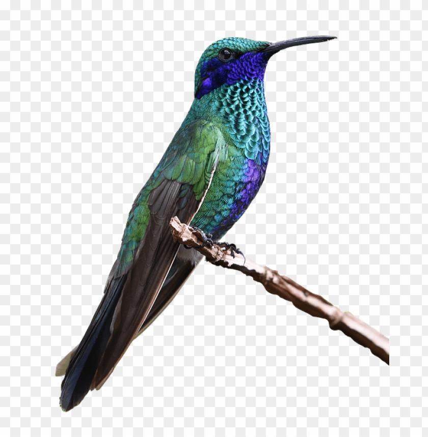 free PNG hummingbird s PNG images transparent
