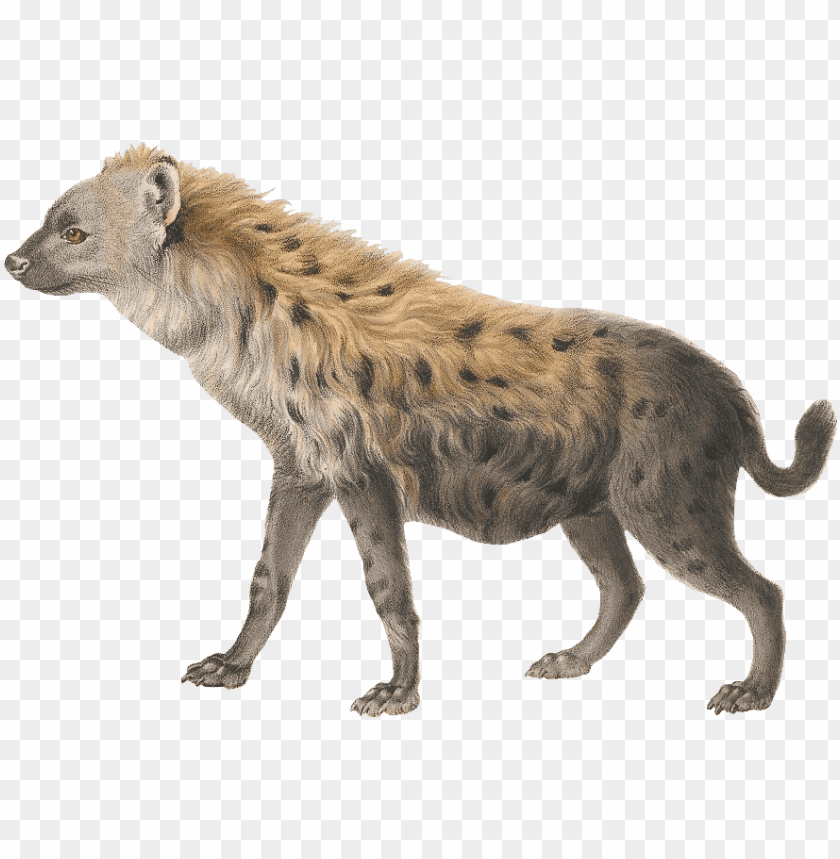 free PNG hyena PNG images transparent