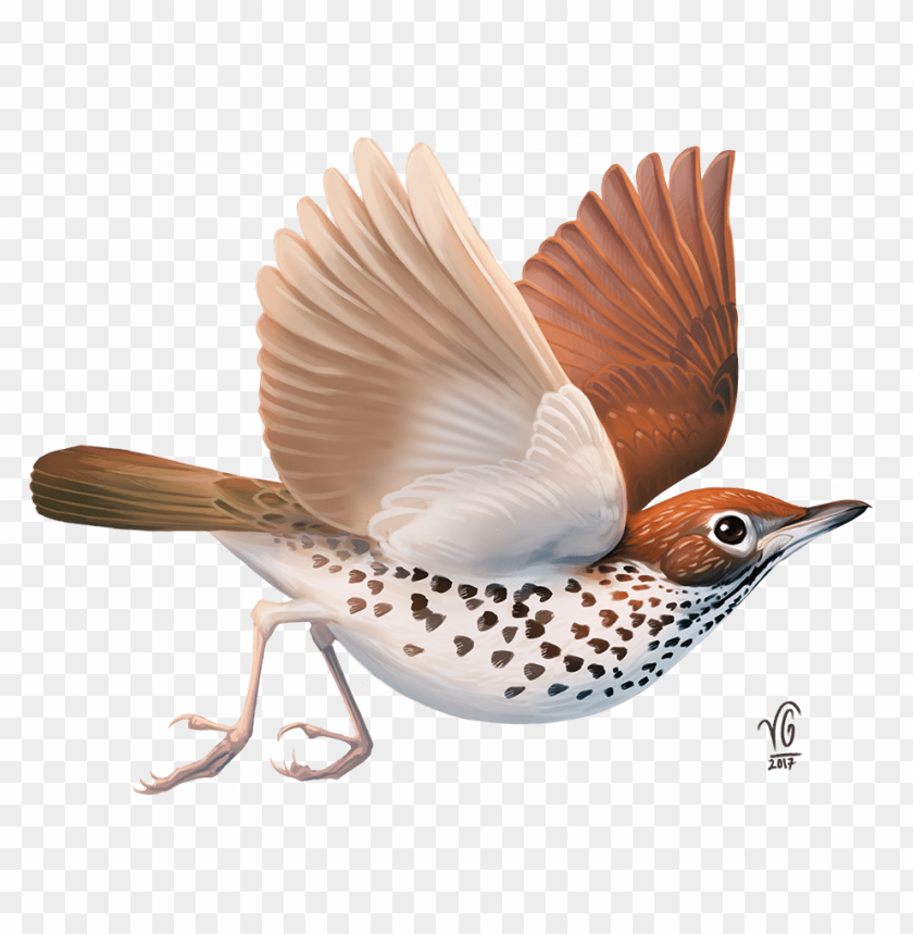 free PNG i also love stories - fantasy bird PNG image with transparent background PNG images transparent