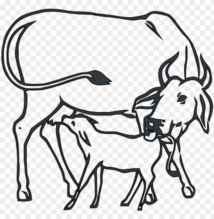 Drawing Dairy Cow Coloring Pages - NetArt | 859x840