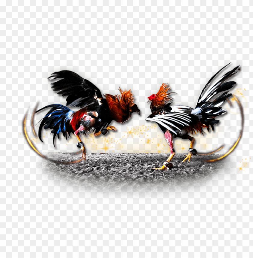 free PNG Download imagenes de gallos de pelea png images background PNG images transparent