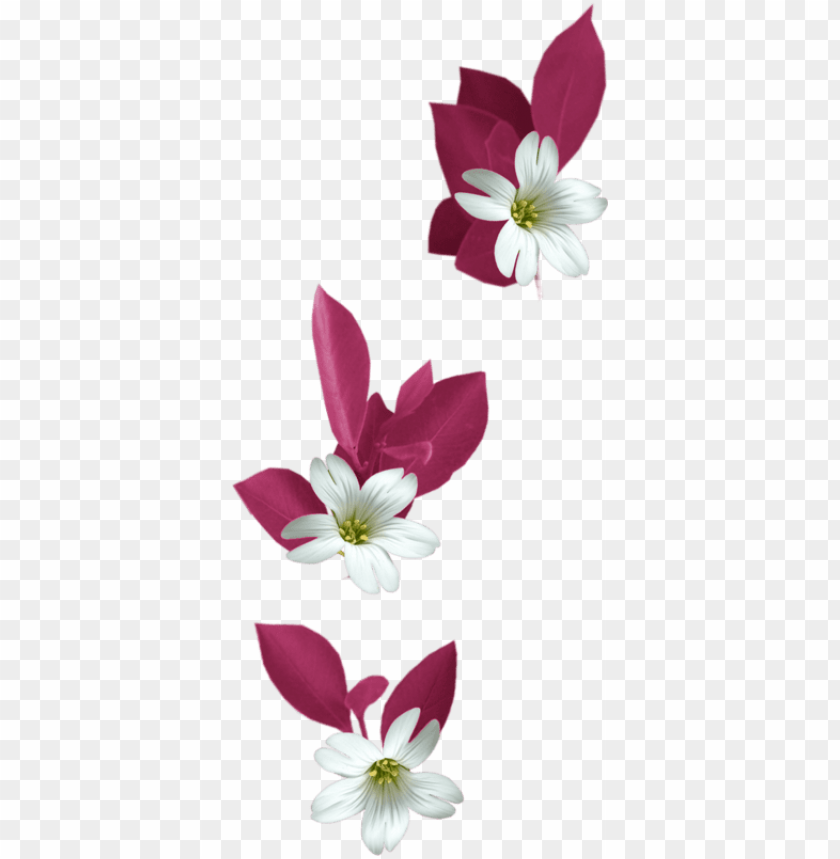 free PNG in by jadwiga on kwiaty transparent - flowers png tubes PNG image with transparent background PNG images transparent