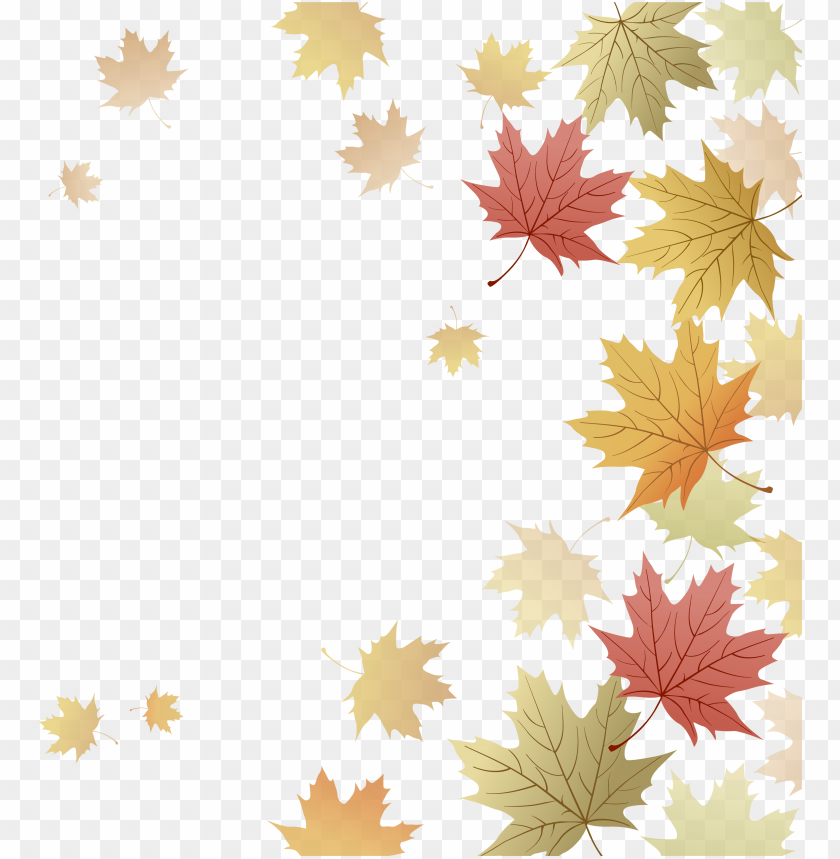 free PNG japanese maple red maple maple leaf autumn - fall leaves border transparent free PNG image with transparent background PNG images transparent