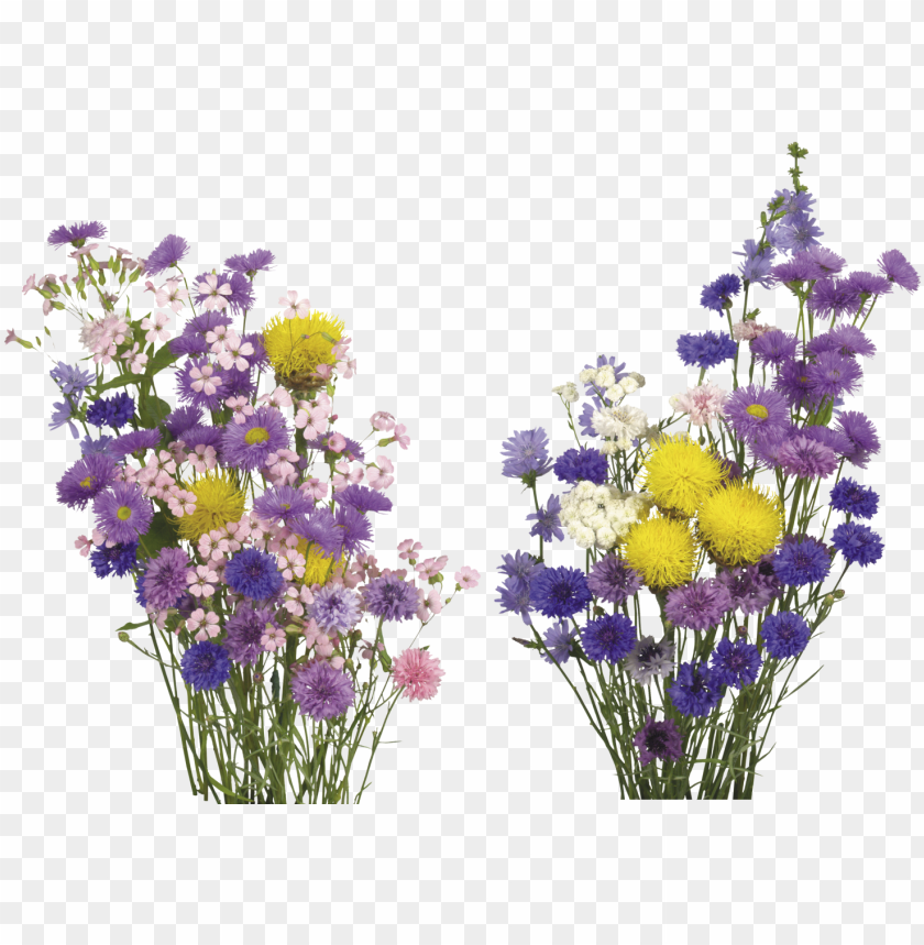Kisspng English Lavender Cut Flowers Overlay Real Flower