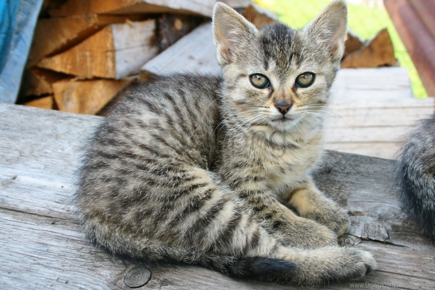 free PNG kitten, lie, striped wallpaper background best stock photos PNG images transparent