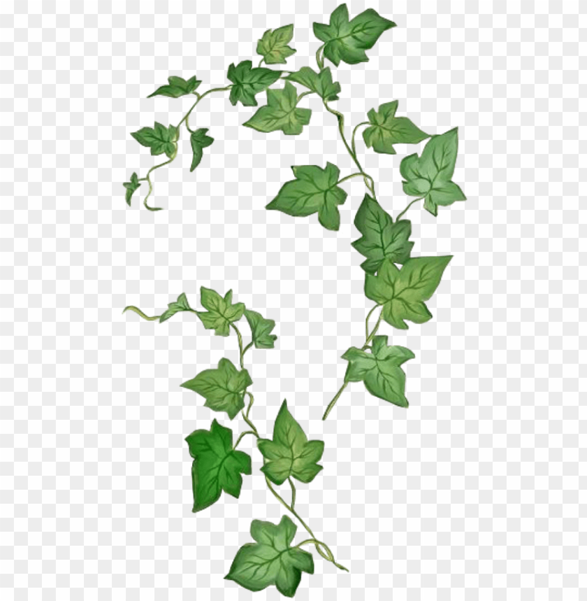 leaves png green kpopedit edits edit overlay - poison ivy
