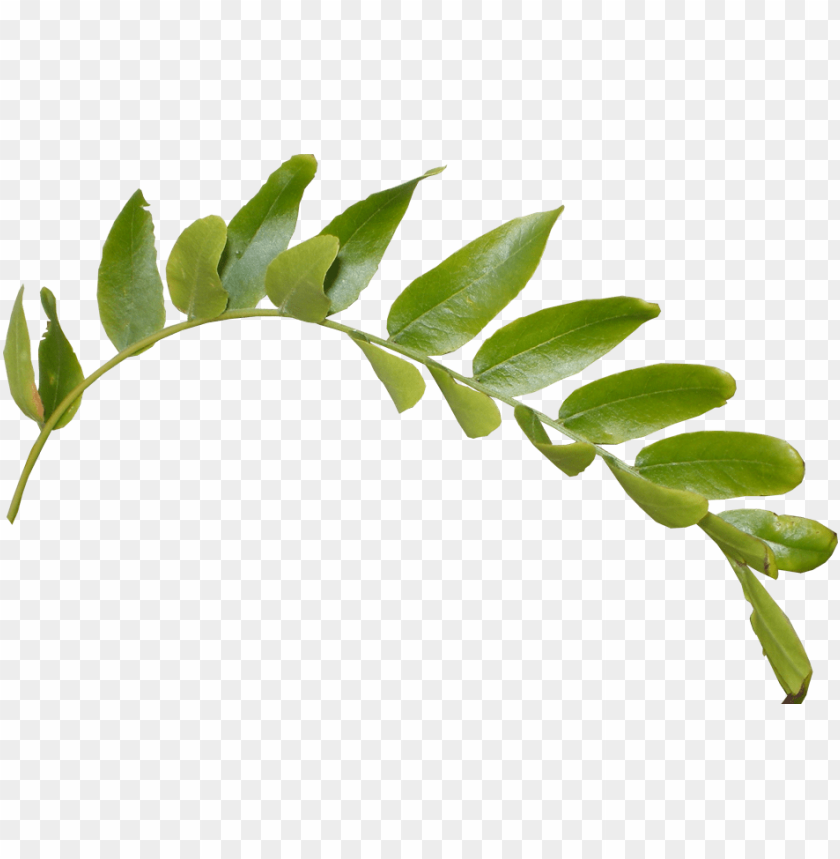 leaves png hd - hd leaves PNG image with transparent