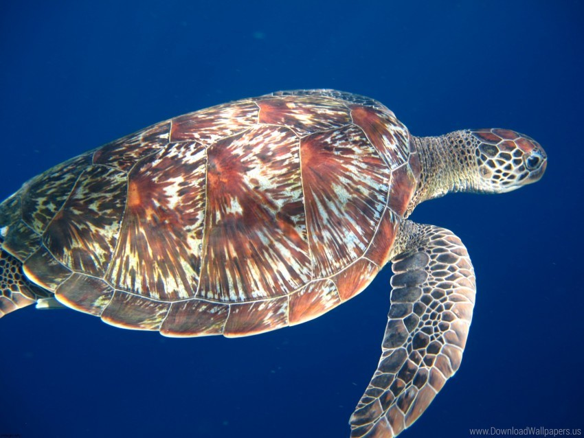 free PNG legs, sea, swim, turtle wallpaper background best stock photos PNG images transparent