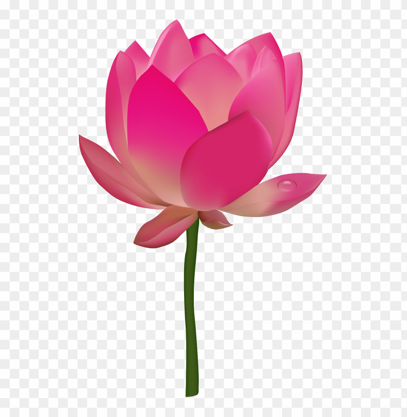 Lotus flower png free png images toppng free png lotus flower png images transparent mightylinksfo