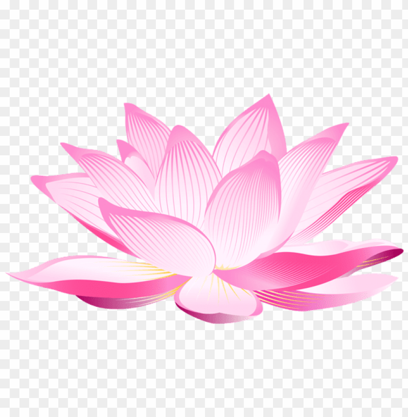 Download Lotus Flower Png Images Background Toppng