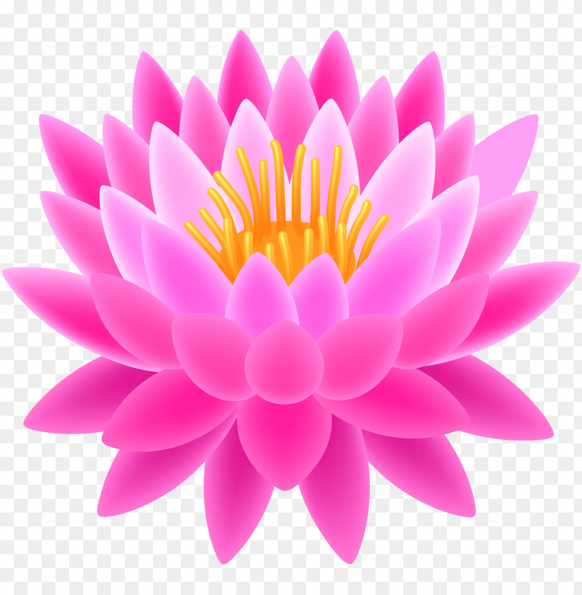 Lotus Flower Transparent Background Png Image With Transparent