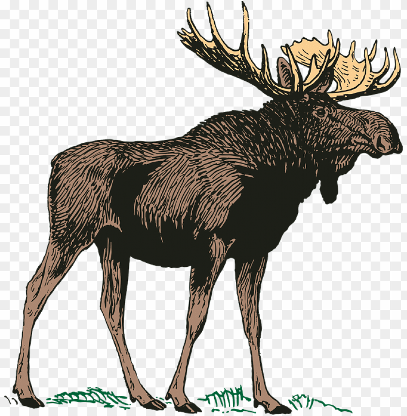 free png moose png PNG images transparent