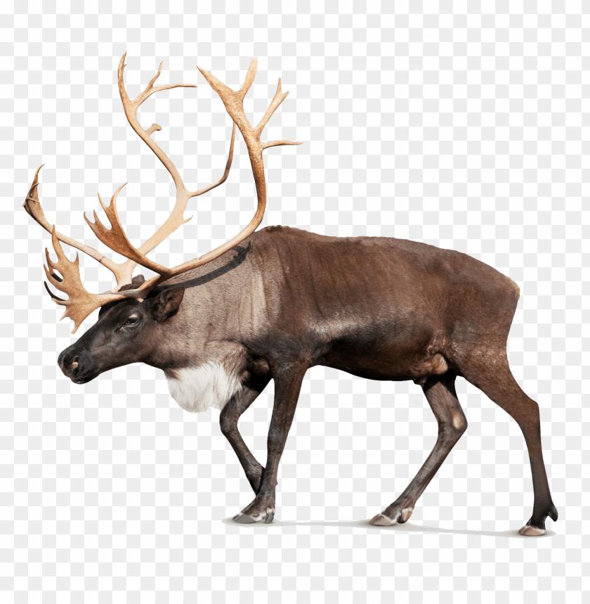 free png moose png pic PNG images transparent