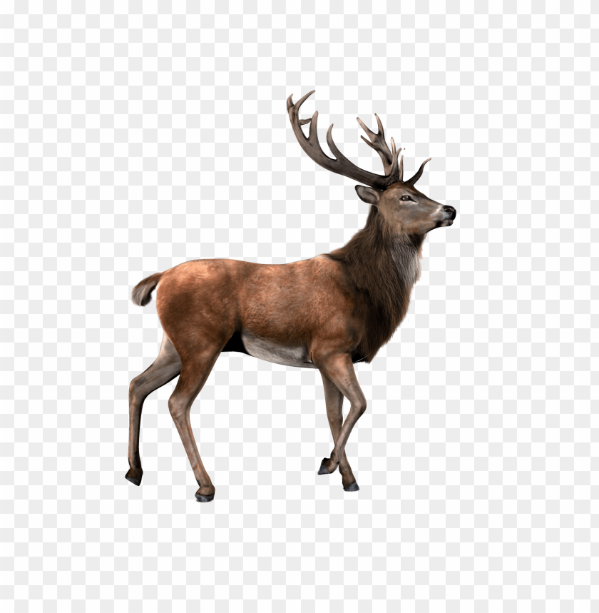 free png moose s PNG images transparent